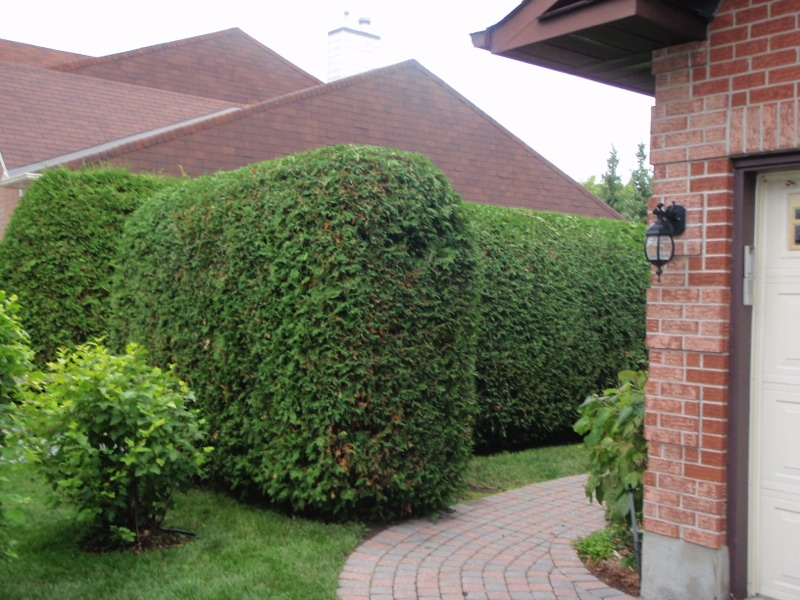 RayzorHedges trimmed hedge.